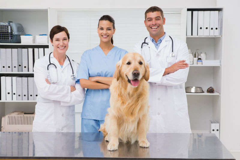 Vets and golden retriever