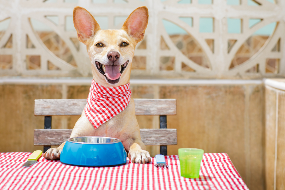 Happy dog sitting at picnic table with dog bowl and cutlery