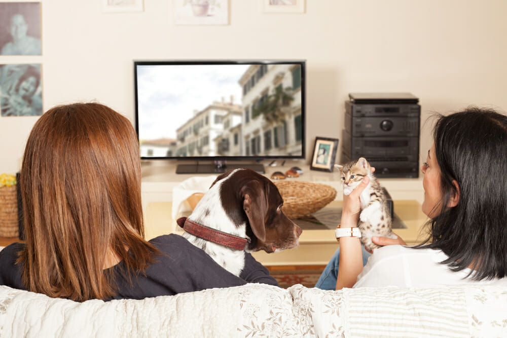 Back view of two women watching television with a dog and kitten