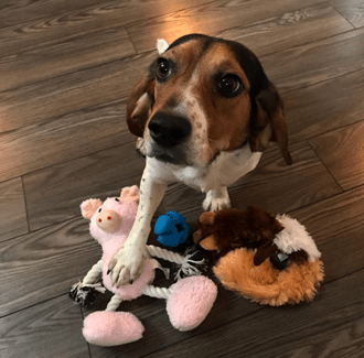 rescue dog with toys